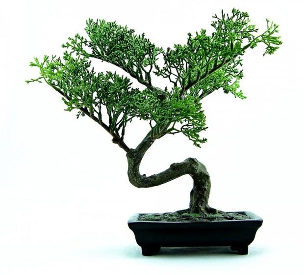 Les infos à connaitre pour acheter un bonsaï